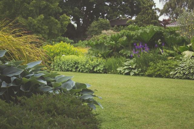 Jak zadbać o trawnik w czasie upałów?